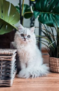 Eco friendly cat care: a complete guide | Cura eco friendly del gatto: una guida completa